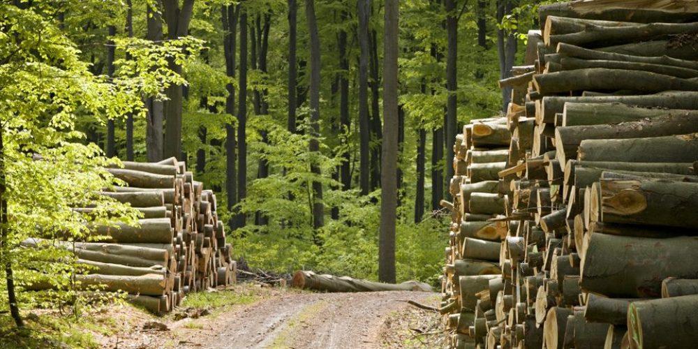 Exploatarea forestiera incepe sa intre in legalitate in Romania