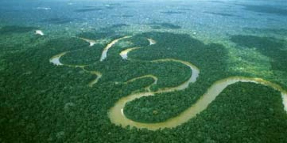 Padurea amazoniana absoarbe din ce in ce mai putin dioxid de carbon