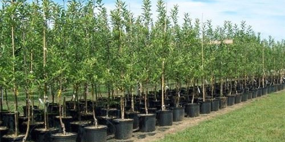 Luna Plantarii Arborilor a debutat cu stangul in Bihor