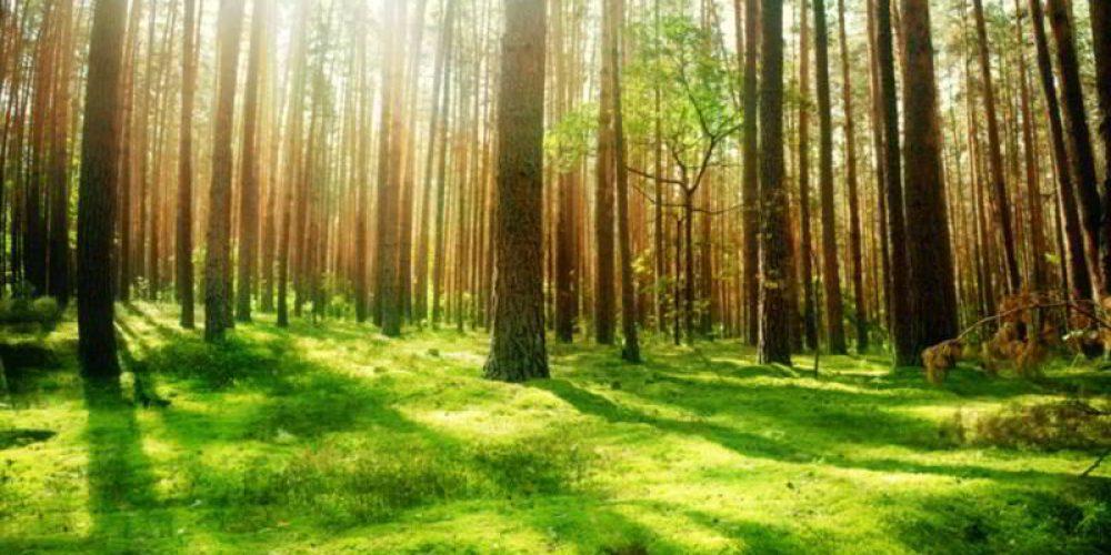 Albania protejeaza drastic padurile